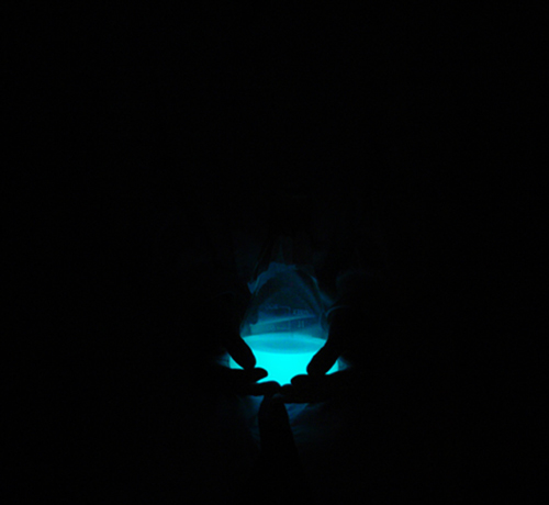 'bioluminescent held' copyright Anne Brodie 2008